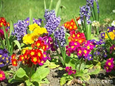 flores-coloridas1
